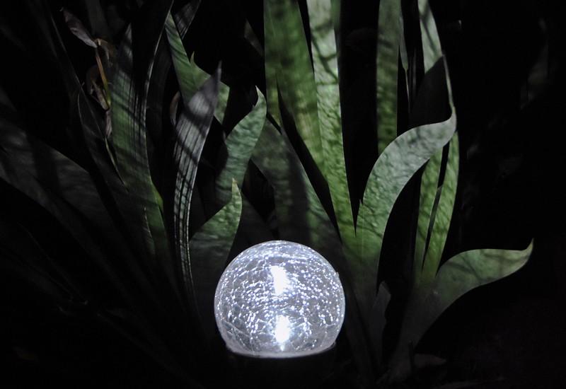 Light Of Iris-Helen Brown