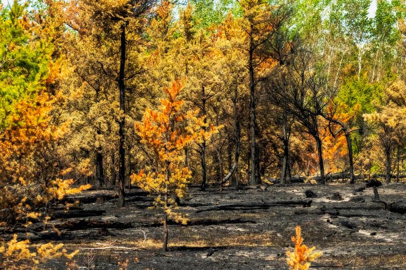 After The Fire-Jane Hiebert