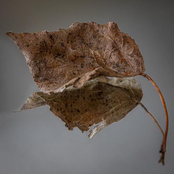 Fallen-Cathleen Mewis