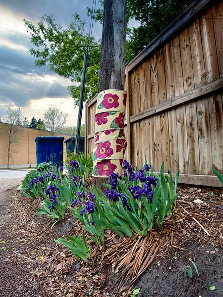 Back Alley Irises-Eric Lawrenz