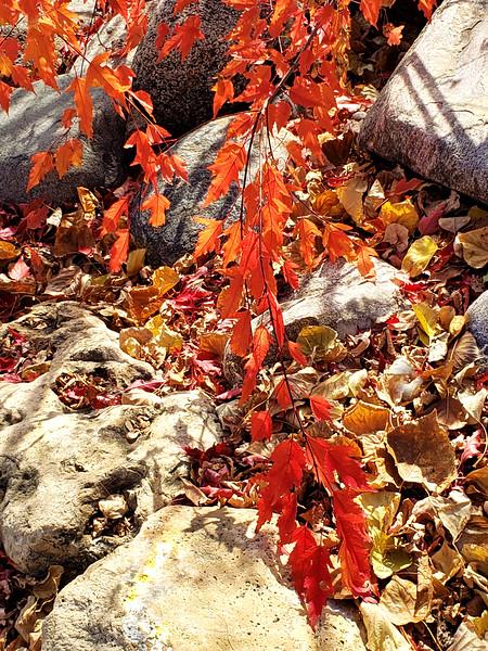 Slash Of Fall