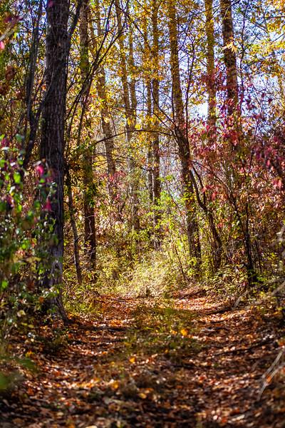 2-A Autumn Stroll-Cathleen Mewis