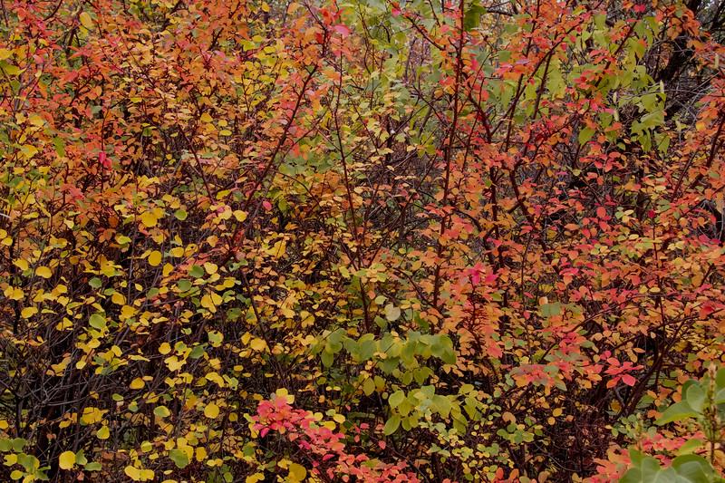 2-Autumn Collage-Natalya Tomlinson