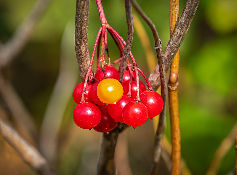 2-Berry Delicious-Averil Hall
