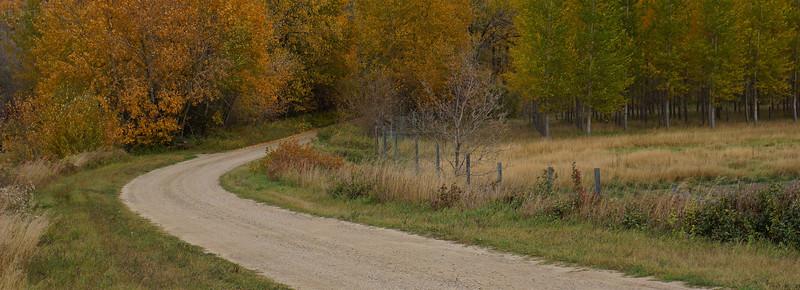 2-Autumn Drive-Angela Wasylow