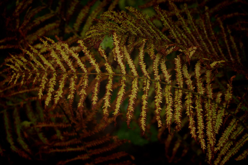 2-Fall Fern Foilage-Maurice Vold