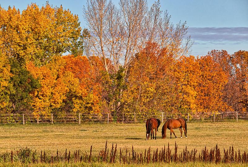 2-Fall On The Farm-Rob Arthur