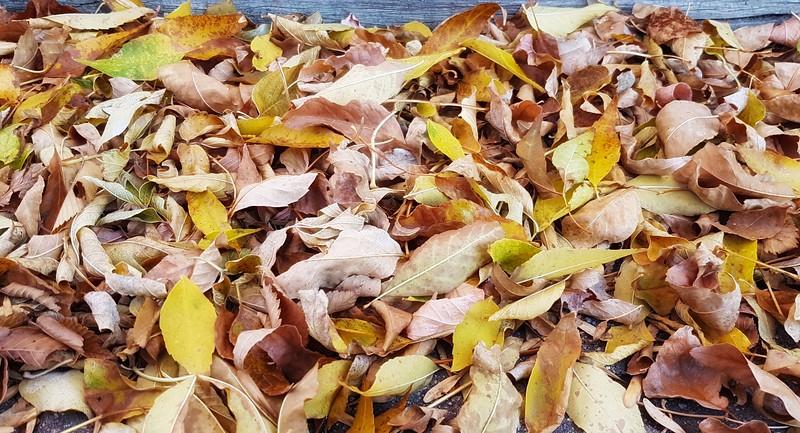 2-Leaves On My Driveway-Judy Salloum