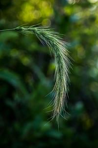 2-Grassy Tail-Rhea Preete