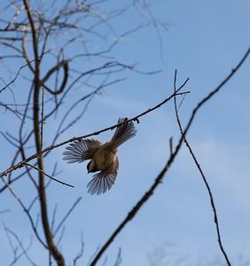 3-Freebird-Patty Martin