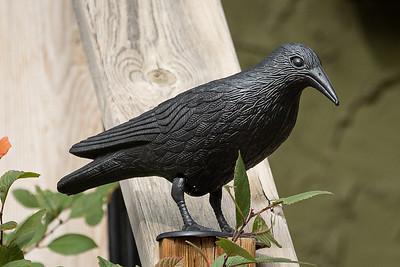 3-Bird-Ken Greenhorn