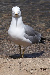 3-Bird-Ian Sutherland