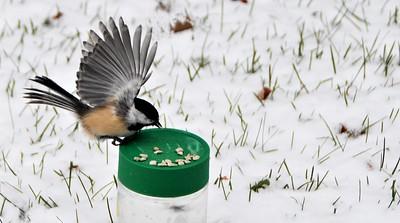 3-Bird-Helen Brown