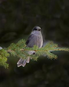 3-Bird On A Bough-Tammy Vallee
