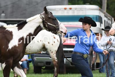 Clinton County Fair horse show 7-13-17