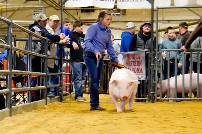 2020014_clinton_swine-17