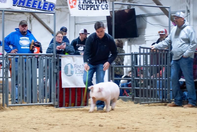 2020014_clinton_swine-22