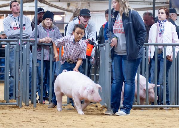 2020014_clinton_swine-19
