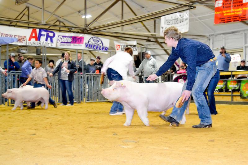 2020014_clinton_swine-15
