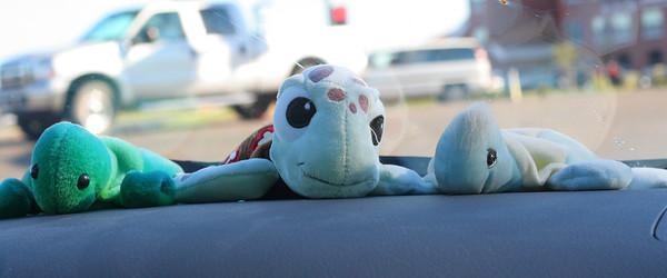 0847 Turtles
