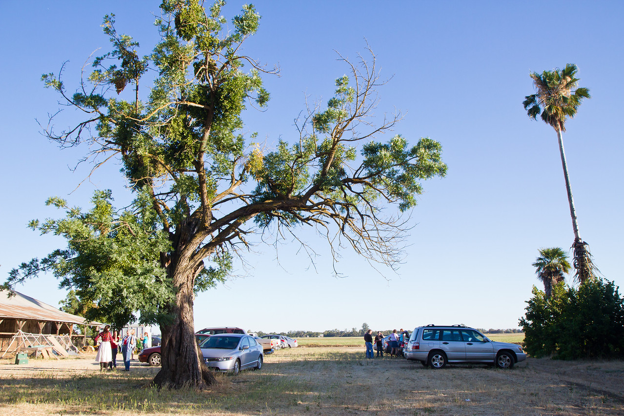 Tree Barnyard