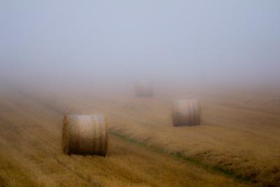 Sea Mist at Clogherhead -1L8A0987