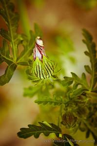 20120712_Garden_0009