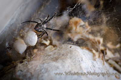 20120711_BlackWidow_0020