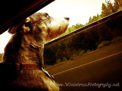 20120721_Dog_0202
