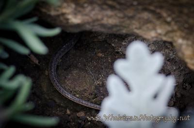 20120725_Garden_0015