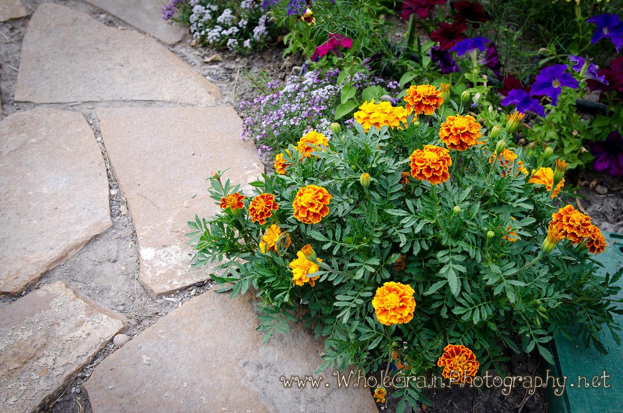 20120712_Garden_0037