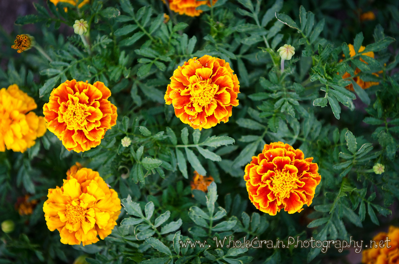 20120712_Garden_0038