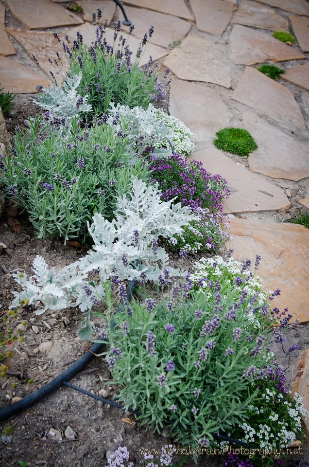 20120712_Garden_0042