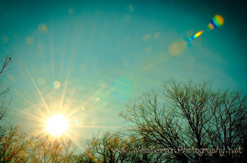 20120106_WinterSun_0005