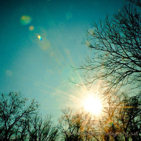 20120106_WinterSun_0023