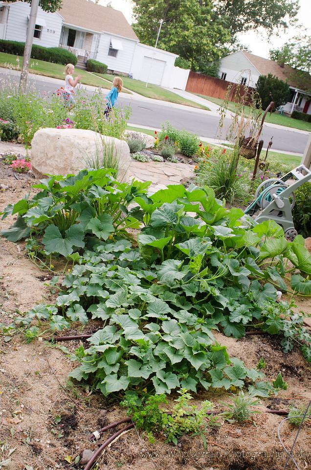 20120712_Garden_0032