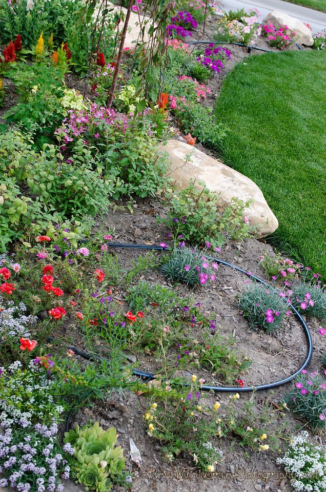 20120712_Garden_0046