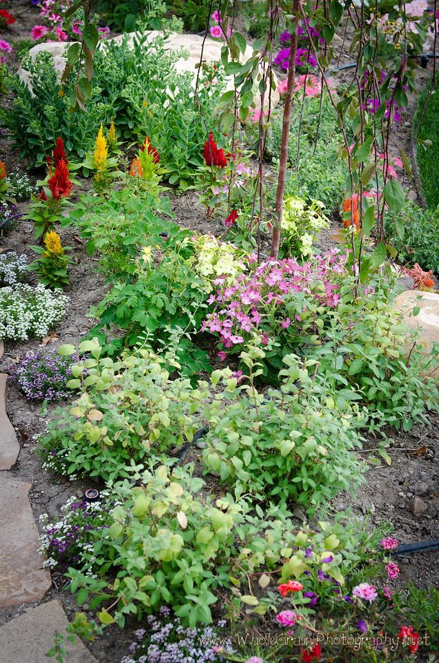 20120712_Garden_0045