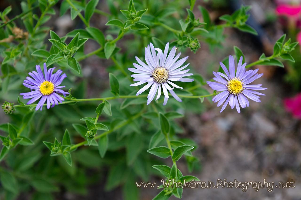 20120712_Garden_0033