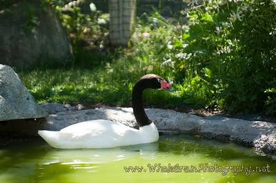 20090619_Aviary_2675