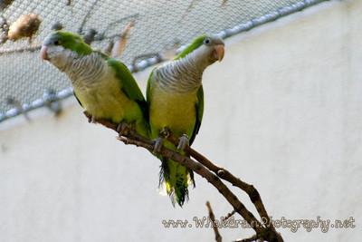 20090619_Aviary_2671