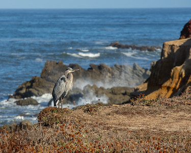 Moss Beach, California