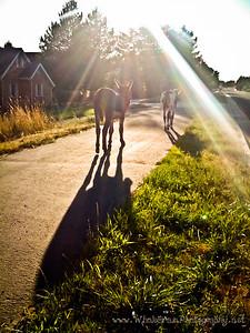 20100901_Donkey-1000