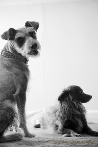 20101005_Dogs_6225