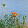 Wildflowers by the river