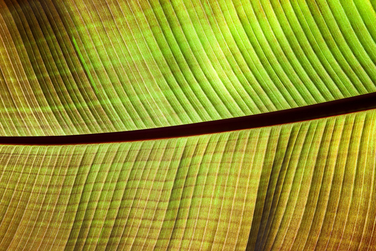 Backlit Palm Frond