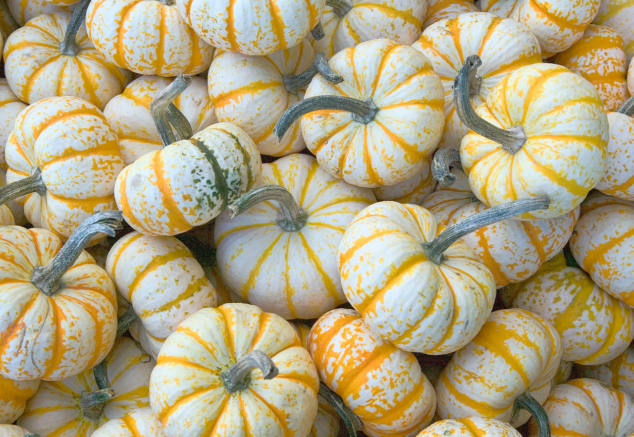 Orange Gourds