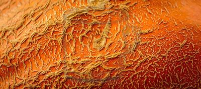 Great Pumpkin, sub 500lb class
