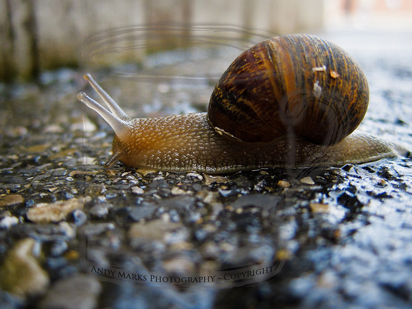 Invertebrates of the back parking lot