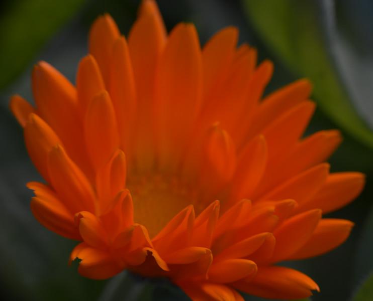 """TC-3212  """"Orange Splash"""""""